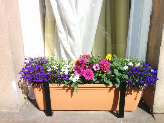 Dorstan Guest House: Loverrly window boxes with summer flowers