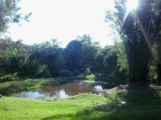 construir gruta jardim : construir gruta jardim:Jardim Paleobotânico de Mata – qué saber antes de ir – TripAdvisor