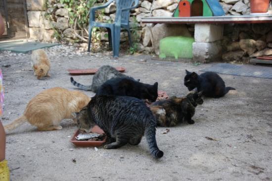 I Gatti di Su Pallosu: Lecker Futter!
