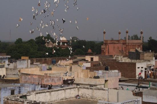 Hotel Sidhartha: Roof