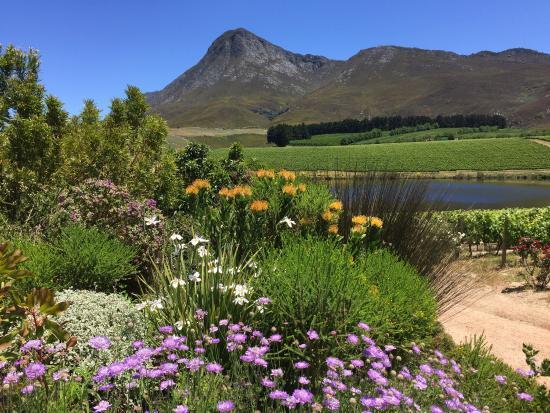 Hermanus, Sudáfrica: photo4.jpg