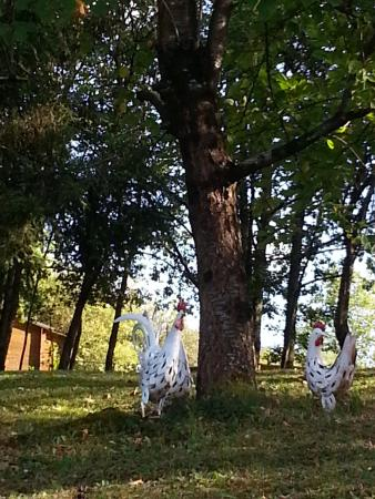 Monthou-sur-Cher, Γαλλία: Parc boisé à l'arrière de la maison Iris