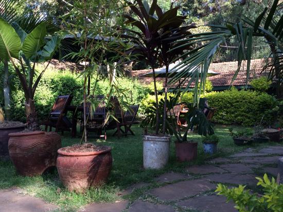 Hibiscus Guest House: Garten