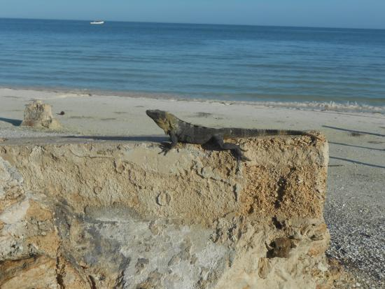 Tribu Hostel : le iguanas della spiaggia
