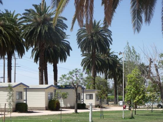 The Palms Caravan Park: Cabins
