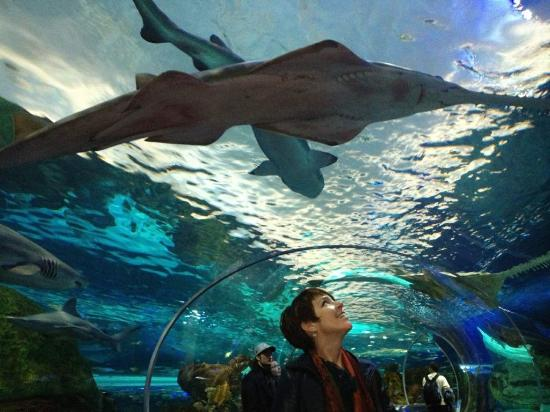 """sharks overhead in the """"water cave"""" - Picture of Ripley's ..."""