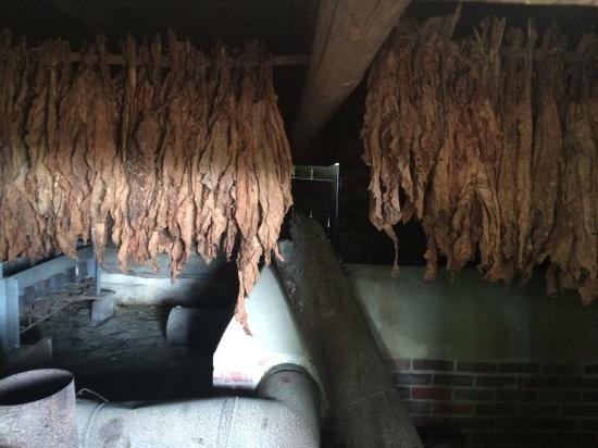 Kenly, NC: Tobacco curing barn