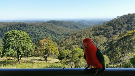 Bunya Mountains Accommodation: View down valley from deck with local birdlife
