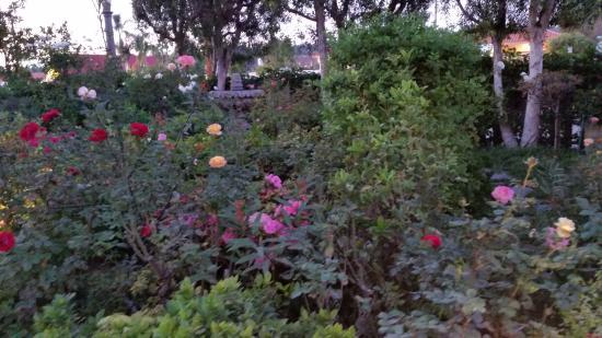 Cat & The Custard Cup: Front garden area