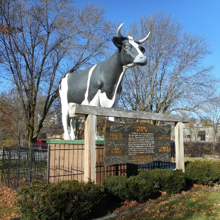 Plymouth, WI: Antoinette the huge Holstein Cow