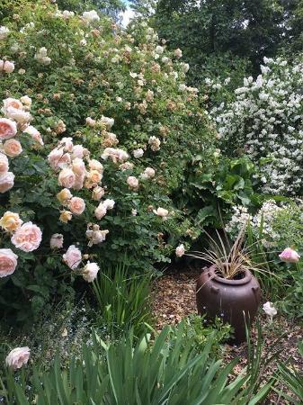 Rosedown Gardens