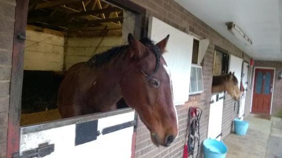 Stable Picture Of Arniss Equestrian Fordingbridge