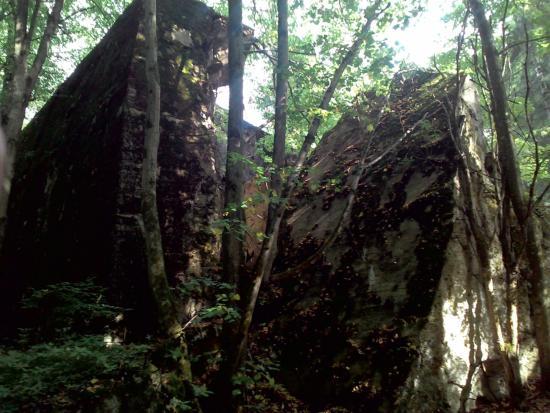 Gierloz, Polônia: И на камнях растут деревья