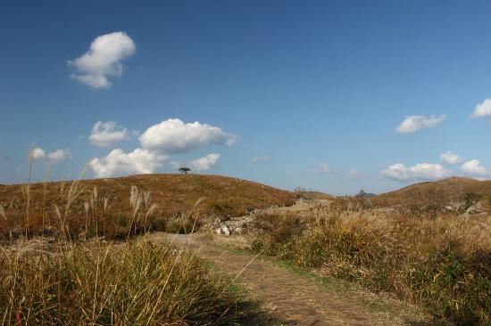 Akiyoshidai Observation Trail