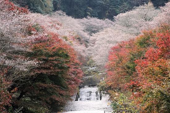 Semmi Shikizakura no Sato
