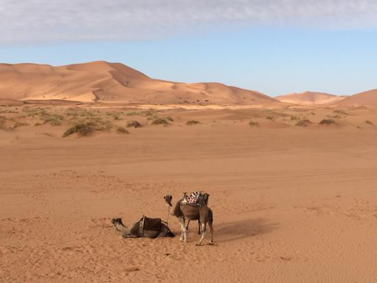 Les Cles Du Desert Luxury Bivouac: The camels in the morning