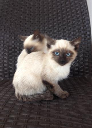 Agriturismo Sa Murta: Twee van de kittens die er waren.