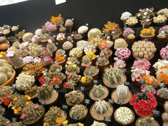 Malvern Wells, UK: Cacti