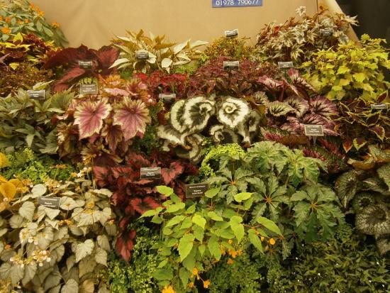 Malvern Wells, UK: Begonia Mania