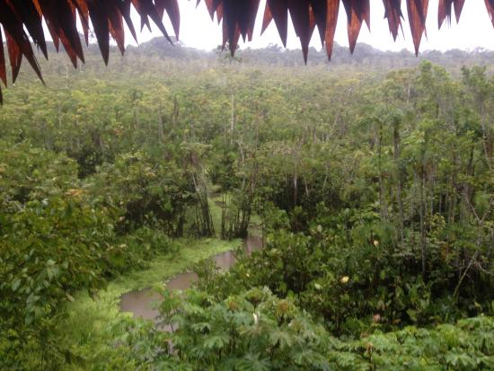 "Maniti Camp Expeditions: View from the top of the ""Treehouse"""