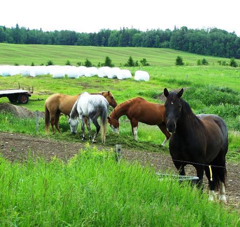 Saint-Jean-de-Dieu, Canada: De nombreuses fermes, Tronçon Sénescoupé