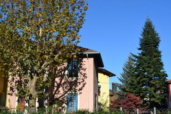 I 4 alberi del giardino un platano un acero rosso e due for Acero rosso milano