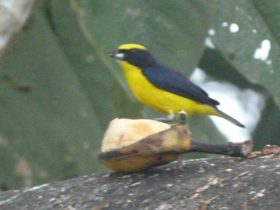 Tandayapa, Ecuador: Beautiful birds at the feeding stations