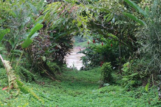 Casa Hospedaje El Gato : tambopata river