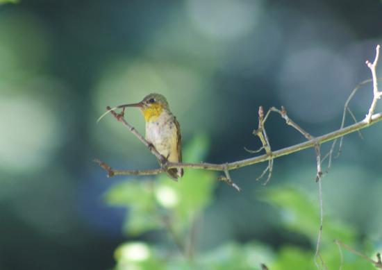 Castlegar, Kanada: One of many hummingbirds that visit May through July
