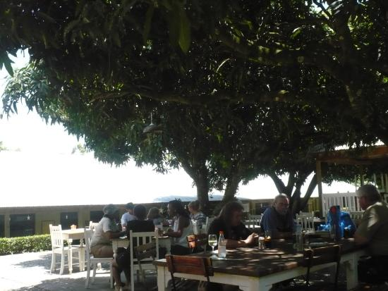 Ganache Cafe: Scenes from the Courtyard restaurant