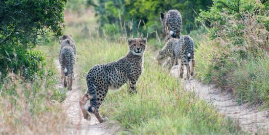 HillsNek Safaris, Amakhala Game Reserve: photo0.jpg
