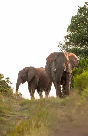 HillsNek Safaris, Amakhala Game Reserve: photo1.jpg
