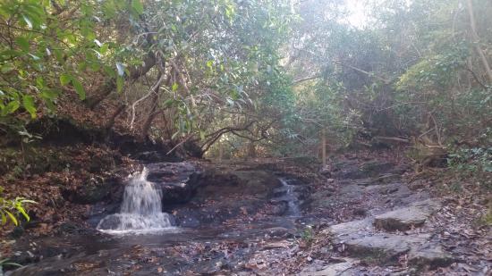 Wolf's Den Hiking Trail