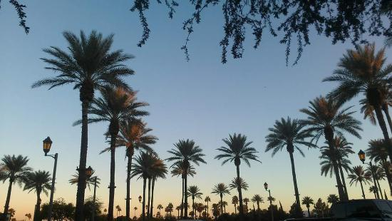 Litchfield Park, AZ: View from in front of the lobby