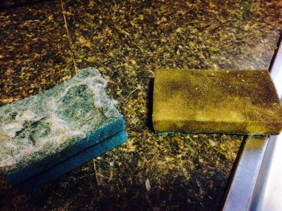 Albrightsville, PA: The sponges that were left for us