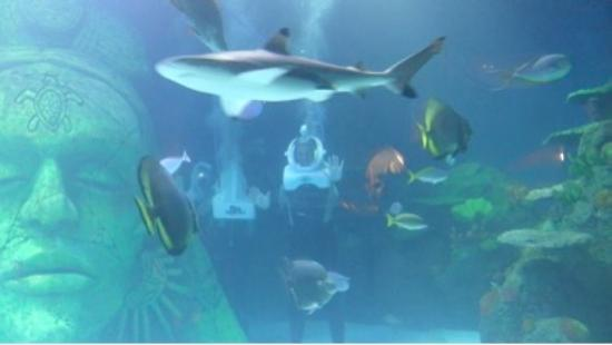... sharks.... - Picture of Sea Life Manchester, Trafford - TripAdvisor