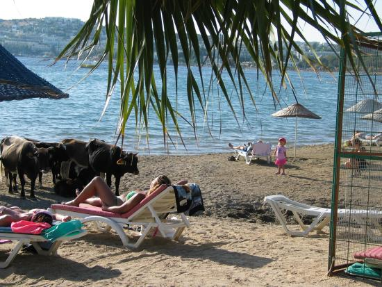 Bodrum Beach Resort Pl U Moe Nejbl Hotelu