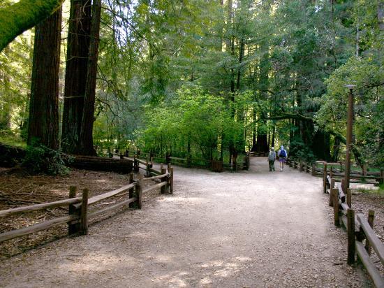 Ben Lomond, CA: Mountain trail - Photo courtesy of Mark Barnes