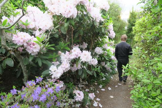 Fraser Highlands Retreat: walking around garden with coffee in the morning