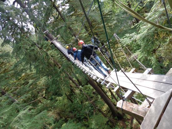 Alaska Canopy Adventures Zipline & Zipline - Picture of Alaska Canopy Adventures Ketchikan - TripAdvisor