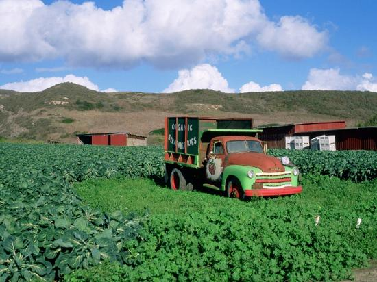 Davenport, CA: Swanton Berry Farm - Photo courtesy of Frank Balthis