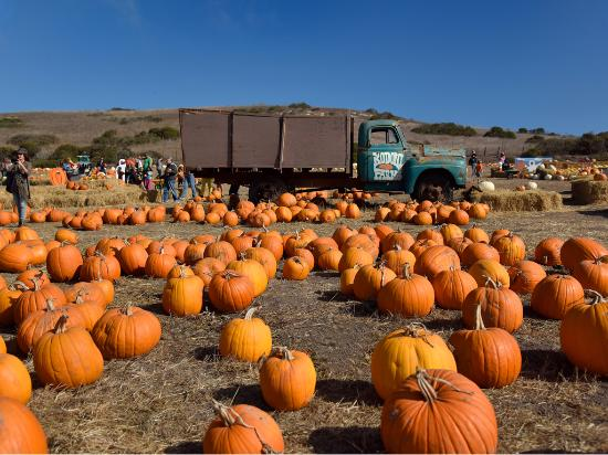 Davenport pumpkin patch - Photo courtesy of Paul Schraub