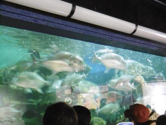 Hekinan Seaside Aquarium - Hekinan Youth Maritime Science Museum: 餌やりタイム