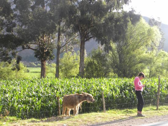 Madre Tierra Resort Sacred Valley : Paseando por los alrededores
