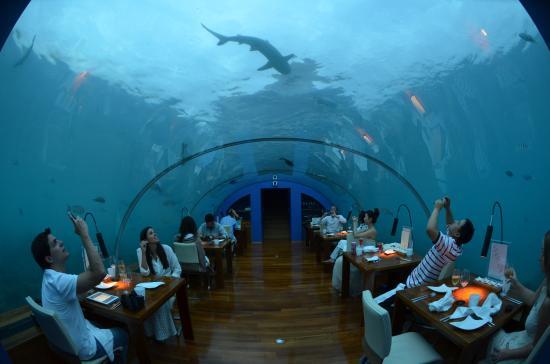 Ithaa Underwater Restaurant Picture Of Conrad Maldives Rangali