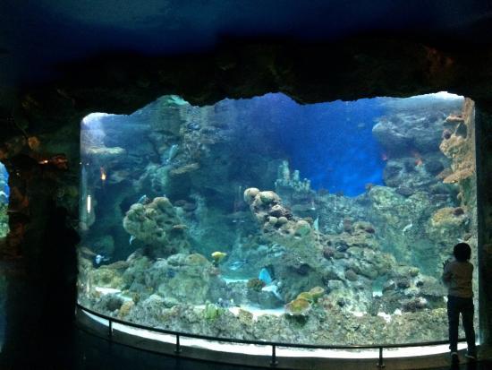 Fakieh Aquarium: 1
