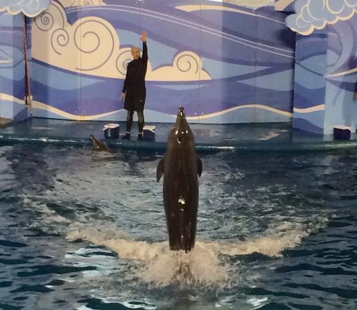 Fakieh Aquarium: 2