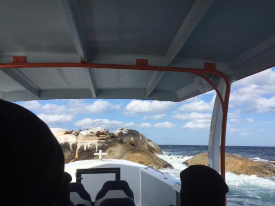 Binalong Bay, Australia: Seals