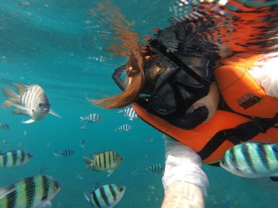 Ko Tao Diving Tour - Buddha View Dive Resort: Wowww