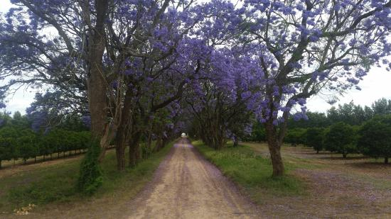 Addo, Sudafrica: the trees in the area